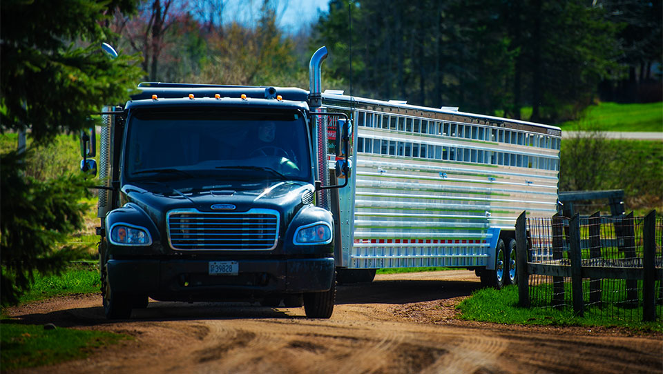 4 Steps to Check a Proposed Convertible Livestock Trailer Insurance Policy