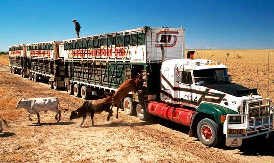 Livestock Truck Insurance Tips To Prepare For Grazing Season