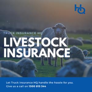 Livestock Insurance Australia | The Importance of Livestock Insurance