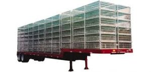 Poultry Transport Trailer Insurance